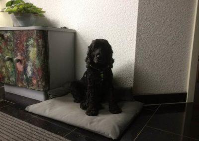 sonnen-sicht-schutz-raumaustatter-hasbergen-hoffties-wetterfeste-outdoorkissen-fuer-wohnbereich-hundekissen-kissen-fuer-hund