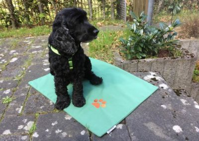Sonnensicht-Schutz - Raumaustatter Hasbergen-Hoffties - wetterfeste - Outdoorkissen - Garten - Hundematten mit Wunschmotiv oder Namen - waschbar