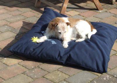 Sonnensicht-Schutz - Raumaustatter Hasbergen-Hoffties - wetterfeste - Outdoorkissen - Garten - Hundekissen mit Wunschmotiv oder Namen - waschbar